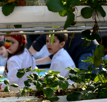 Escuelas públicas que promueven el cuidado del medio ambiente 15