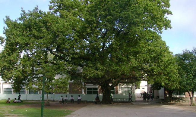 Colegio Nuestra Señora de Ranelagh 54